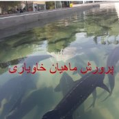 آموزش پرورش ماهیان خاویاری