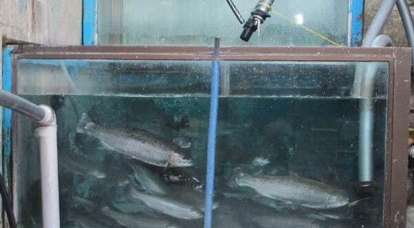 پرورش انواع ماهی در منزل
