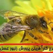 طرح توجیهی پرورش زنبور با ظرفيت 700 كندو
