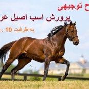 طرح توجیهی پرورش اسب عربی